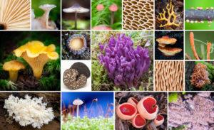 Svampars fruktkroppar uppvisar en stor variation i färg och form
